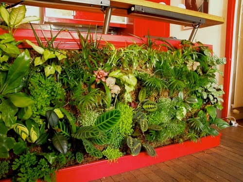 Tanaman hijau memang menjadi favorit banyak orang untuk dipakai sebagai pengisi  Cara Membuat Taman Indoor dalam Rumah