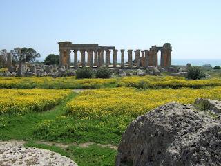 Blick von den Resten von Tempel G über die Reste von Tempel F auf die Nordseite  des Tempels E von Selinunt