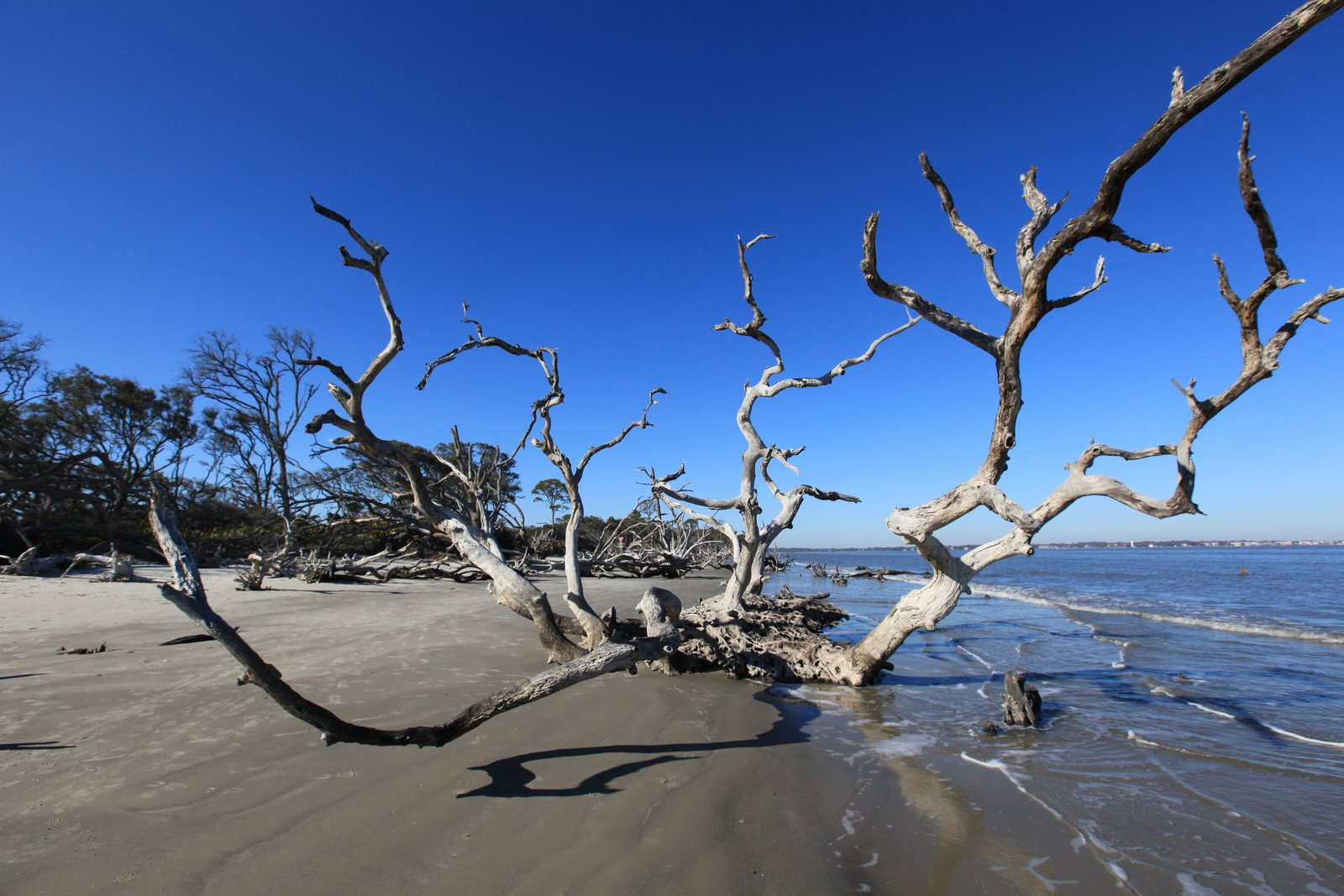 Today S Creations Driftwood Beach Jekyll Island