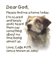 Adopt & Rehome a Pet