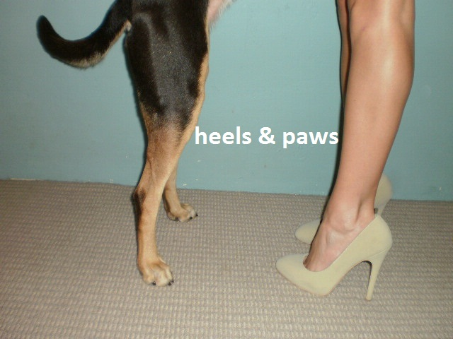 Heels&amp;Paws