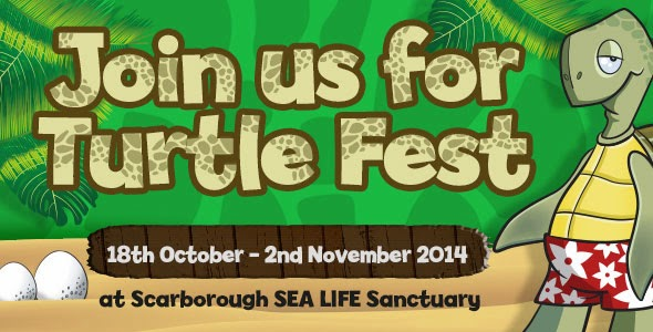 Turtle Fest at Scarborough SEA LIFE Sactuary