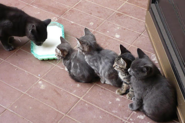 waiting for milk, funny cat photos