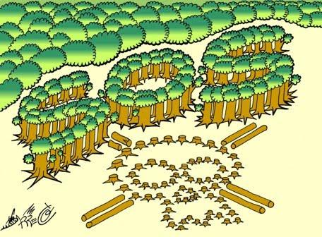 Timelapse muestra la deforestación del Amazonas en los últimos 13 ...