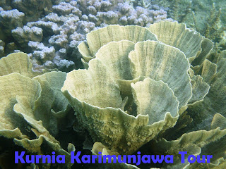 Wisata Karimunjawa Tour