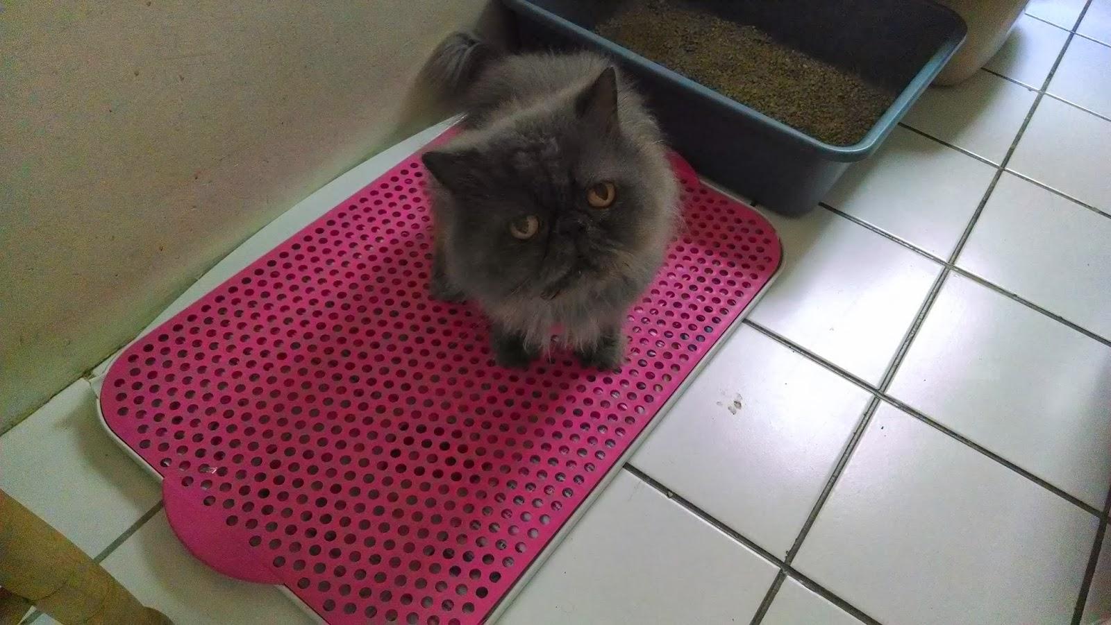 Gata Lili: Uma solução econômica para gato fazer xixi #78283C 1600 901