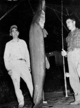 world record alligator gar fish