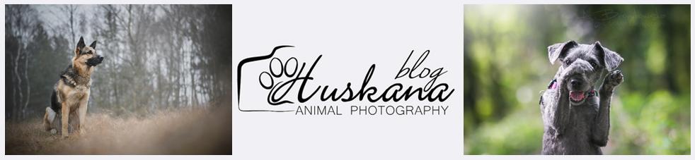 Huskana Fotografia Zwierząt