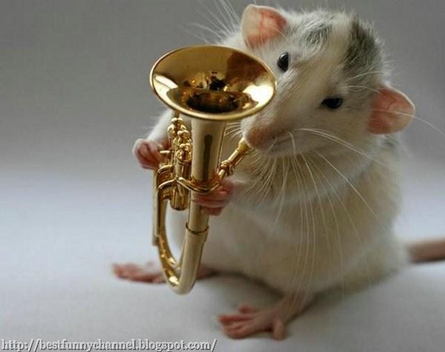 music rat