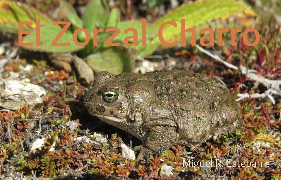 El Zorzal Charro
