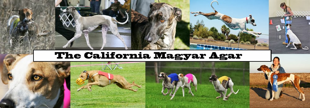 California Magyar Agar