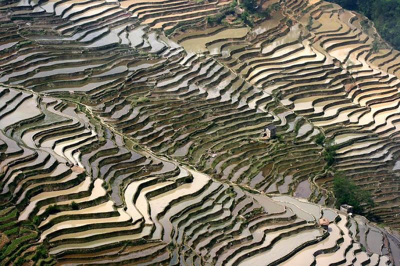 Terasasta polja  Pirincana-polja-7