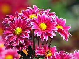 A Flor do Sonho: