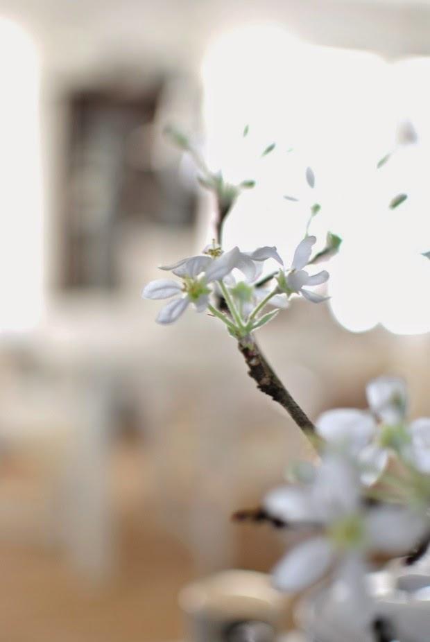 äppelkvist i blom