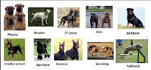 RUGBY según la Raza de los Perros