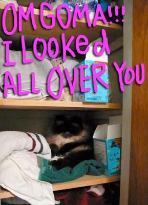 closet-cat-01