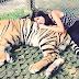 ROAR! | Tiger Kingdom in Chiang Mai, Thailand