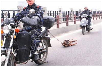 angkatigabelas.blogspot.com : Kejam, Anjing Ini Diseret Menggunakan Motor di Jalanan