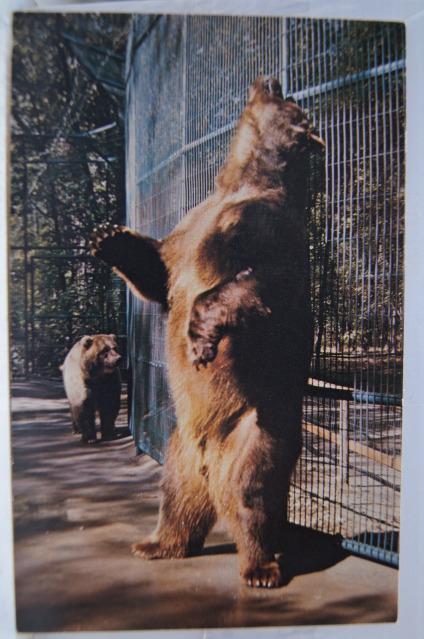 Urso pardo vs Urso polar - Página 2 CLYDE+DAKOTA+ZOO+BISMARK