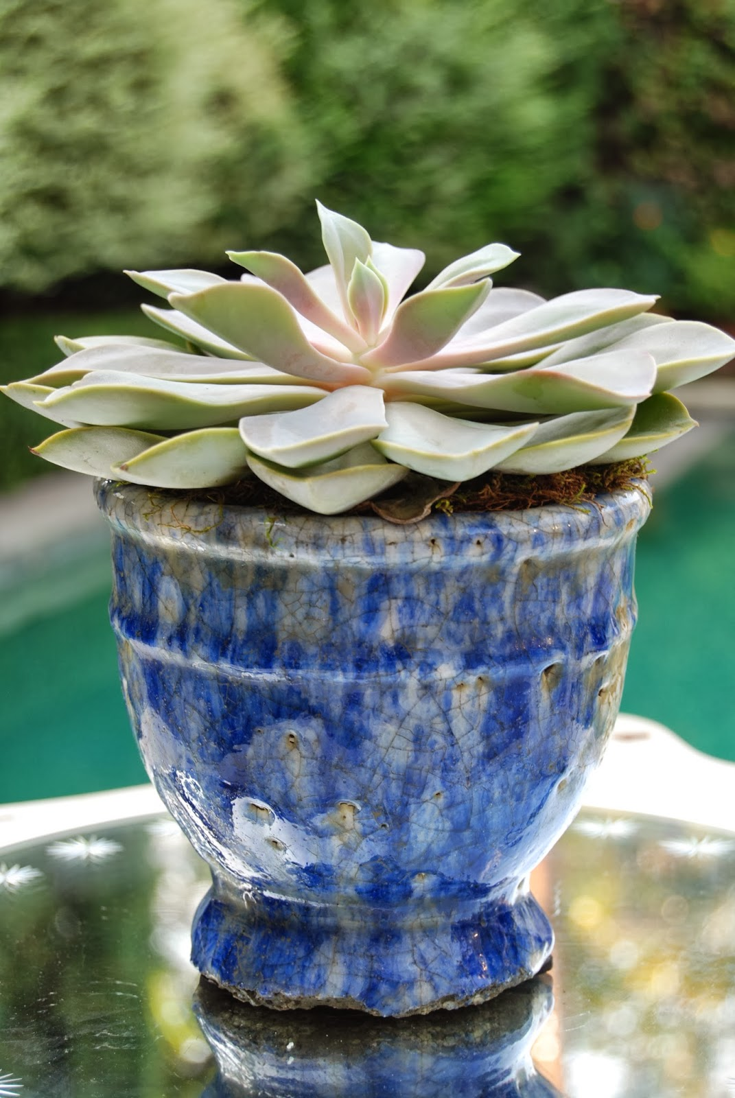 Blue glazed planter with succulent