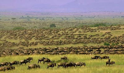 8 The%2BGreat%2BWildebeest%2BMigration %Category Photo