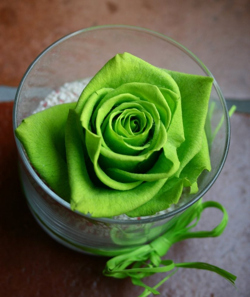 Allinallwalls most beautiful green roses in the world for Green colour rose images