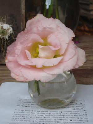 Blume im Schaufenster von L'Atelier Frederic Garrigues