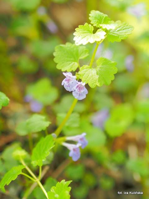 rośliny jadalne, zioła, przyprawy