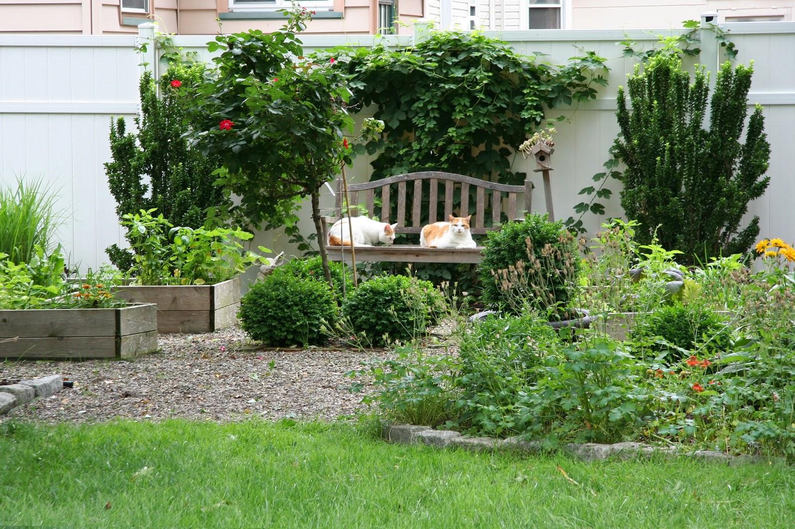 The Kitchen Garden Daffodils Daydreams The Kitchen Garden In June