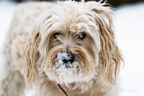 un tourbillon de neige