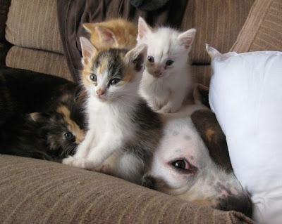 Ver imagenes de animales puede mejorar la concentraci n - Mejorar concentracion estudio ...