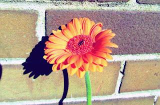 Stephen Chbosky, The Perks of Being a Wallflower, bricks, wall, flower orange, photography