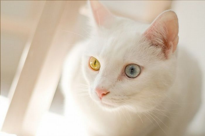 Why are cats different colors?
