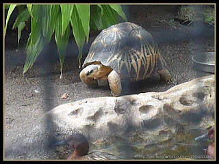 tortoise at Busch Gardens, Tampa, Florida