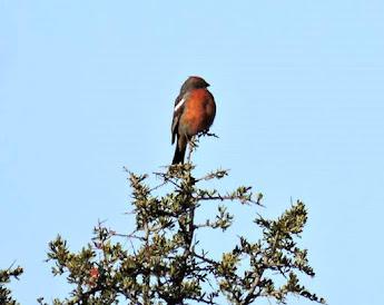 Aves del Colorado