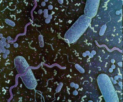 Microbiology: An Introduction. TORTORA Books a la Carte Edition 12th Edition