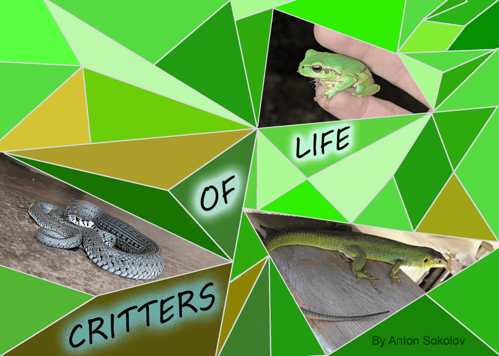 Life Of Critters