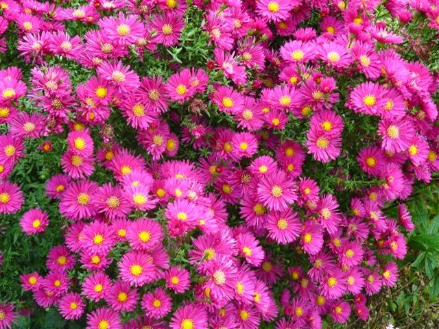 Arte y jardiner a plantas perennes para suelos arcillosos for Plantas perennes exterior