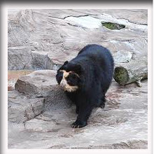 gambar_lucu_beruang_berkacamata