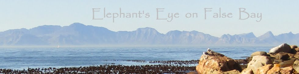 Elephant's Eye on False Bay