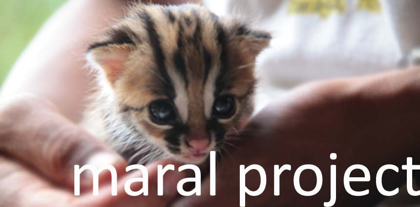 Maral Project