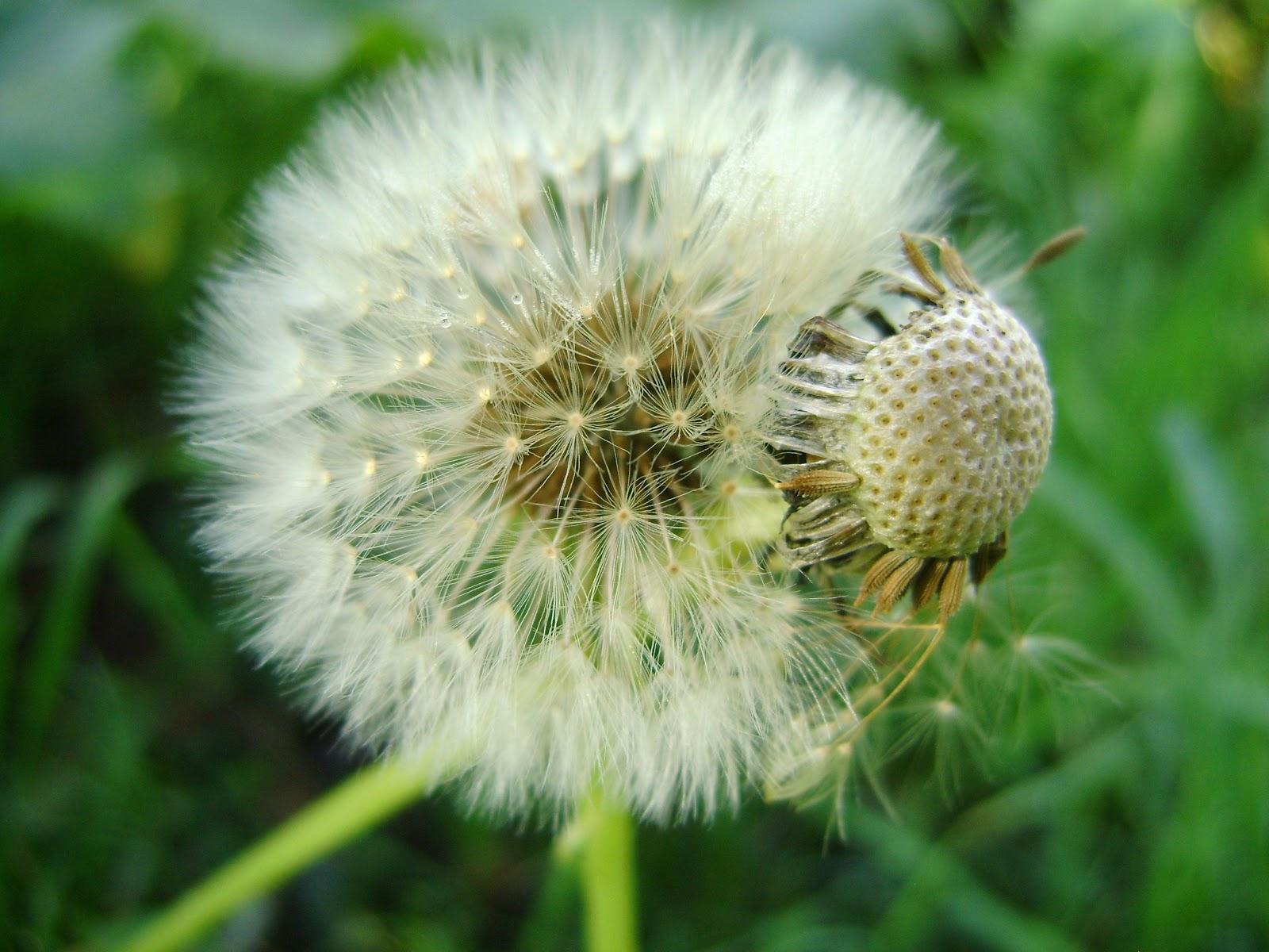 5 plantas aromaticas yahoo dating 7