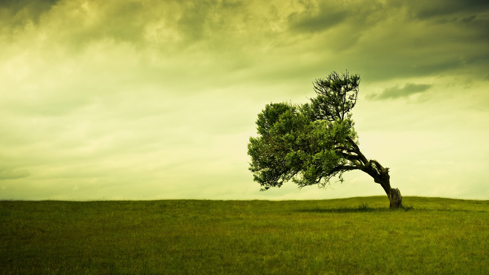Hd tree background wallpapers free green trees photos for Tree wallpaper
