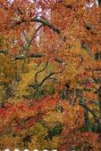 Foliage in November