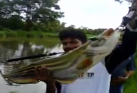 Gila Mancing Ikan Monster Wallago