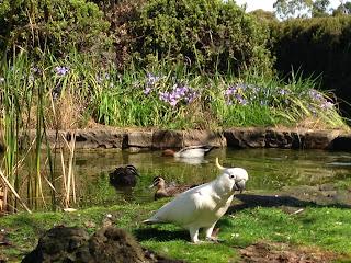 September wildlife in the front garden at Tasma House, Daylesford