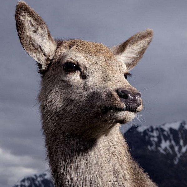 Curiosos retratos de animales divertidos y muy simpáticos