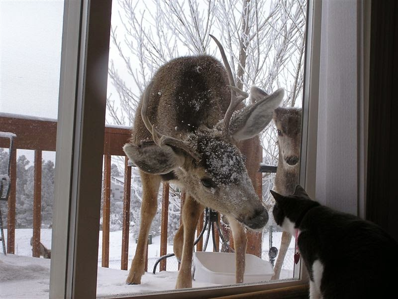 deer at window