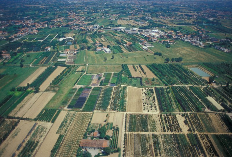 Quarrataedintorniblog vivaismo prorogati i termini del for Vivai a pistoia