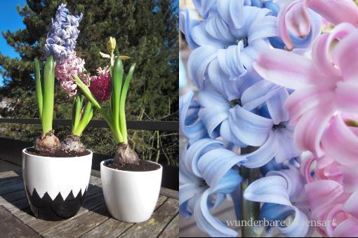 selbst gestalteter Blumentopf und Hyazinthen